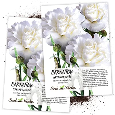 Seed Needs, Grenadin White Carnation (Dianthus caryophyllus) Twin Pack of 500 Seeds Each : Flowering Plants : Garden & Outdoor