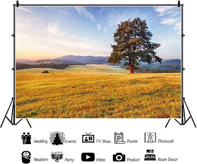Oerju 3x2m Herbst Hintergrund Großer Baum Helle Sonne Kamera