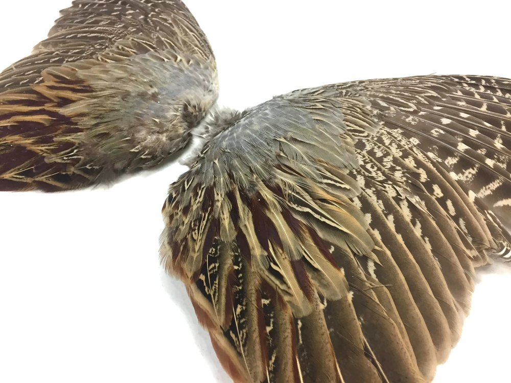 Pheasant Feathers 1 Pair of Ringneck Pheasant Complete Wing Feathers