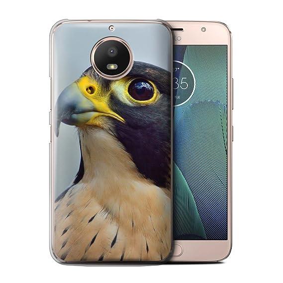 falcon e4