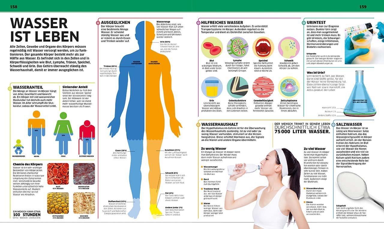 Schön Wo Ist Die Im Menschlichen Körper Befindet Lunge Ideen ...