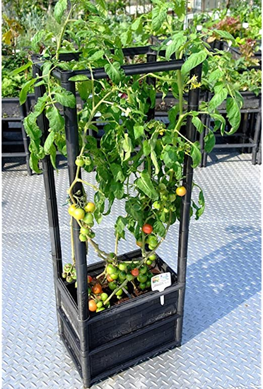 Plantas trepadoras Raised Tomate Vegetal maceta sobre ruedas 24