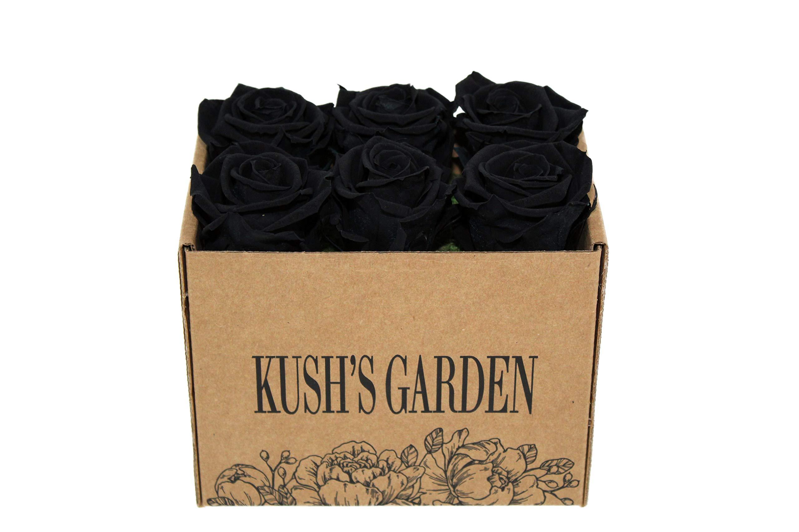KUSHS GARDEN Real Preserved Roses in Box (Midnight Black)