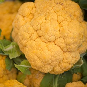 Cheddar Hybrid Cauliflower Gardening Seeds - 100 Seeds - Non-GMO, Orange - Vegetable Garden Seeds by Mountain Valley Seeds