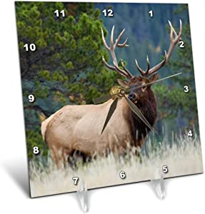 3dRose Danita Delimont - Animals - Rocky Mountain Bull elk - Desk Clocks (dc_330649_1)