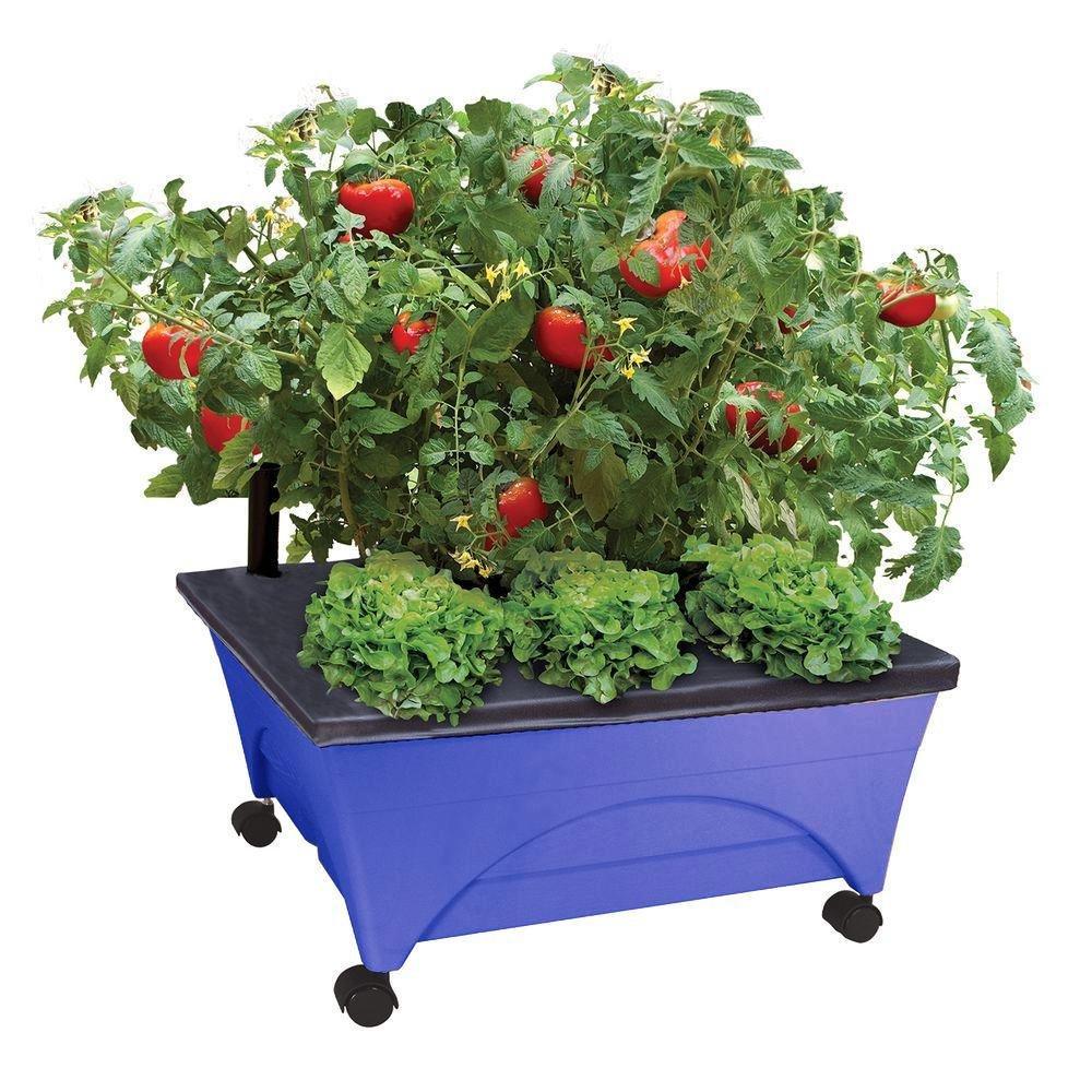 Amazon.com: Emsco - Caja de cultivo y accesorios, Caja de ...