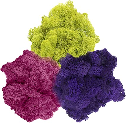 Plus Free Nautical Ebook by Joseph Rains Terrariums Fuchsia Moss Purple 3oz for Fairy Gardens or Any Craft or Floral Project Tri-Color Moss Assortment Reindeer Moss Preserved Lime Green