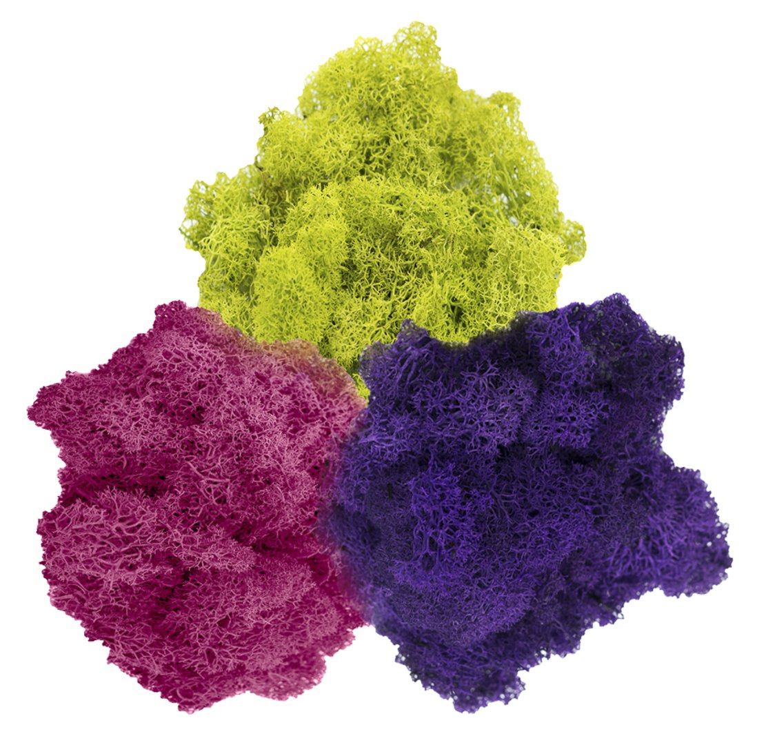 Reindeer Moss Preserved | Tri-Color Moss Assortment | Purple, Lime Green, Fuchsia Moss - 3oz | For Fairy Gardens, Terrariums, or any Craft or Floral Project | Nautical Crush Trading TM NCTS6038