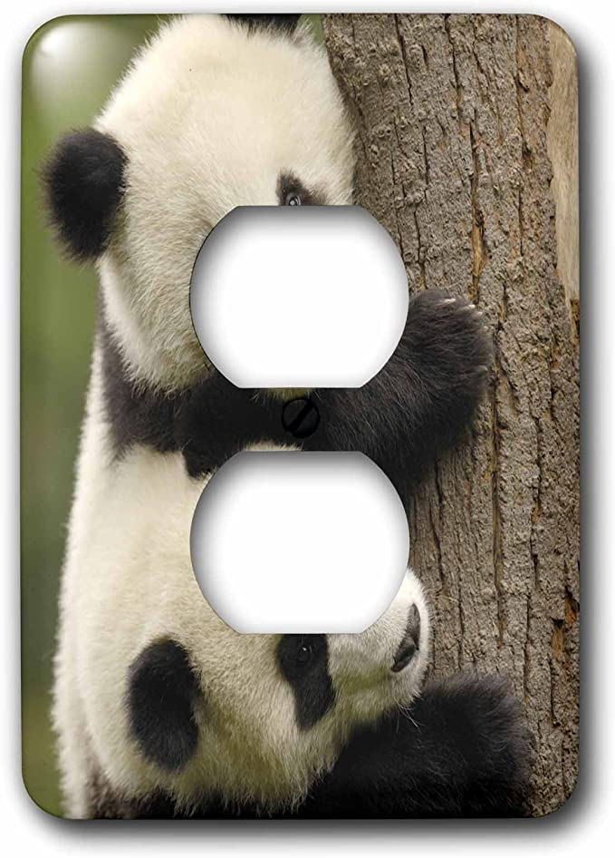 China Plug Outlet Cover Wolong Conservation 3dRose lsp/_70188/_6 Giant Panda Bears