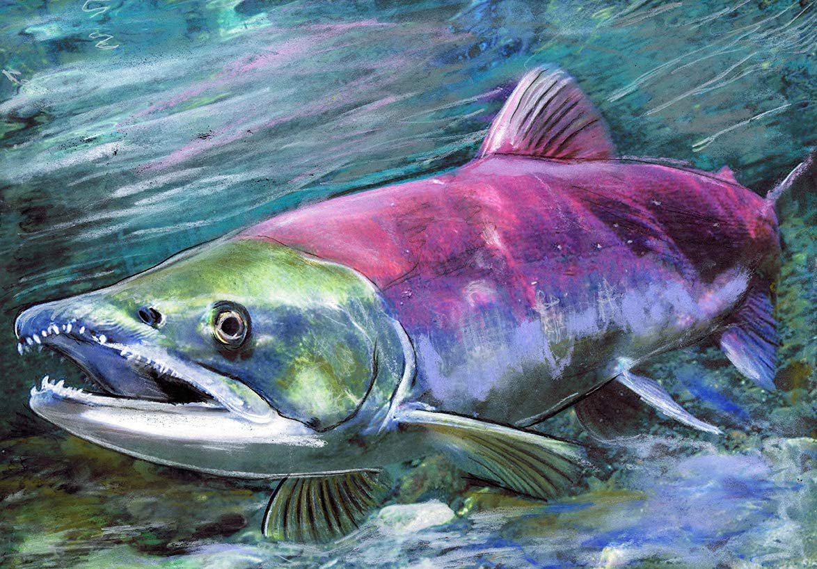man cave art father day gift cabin wall art Colored pencil sockeye salmon print fly fishing decor nature home decor nature wall art