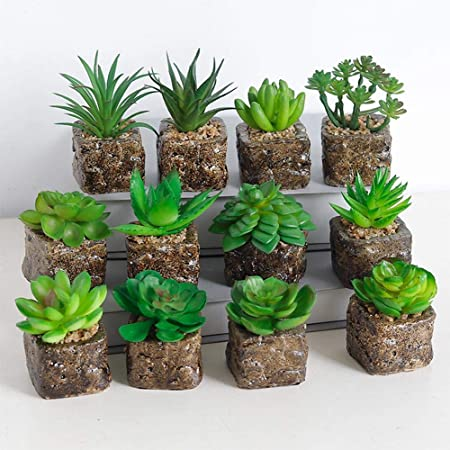 Succulentes Artificiales suculentas Artificiales Decorativas Bonsai de Plantas para casa, jardín, Cocina, Boda, Interior y Exterior: Amazon.es: Hogar