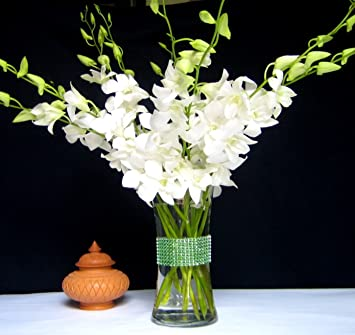Amazon fresh flowers just orchids white dendrobium with vase fresh flowers just orchids white dendrobium with vase mightylinksfo