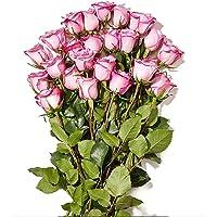 Floral 24-Stem Roses Deals