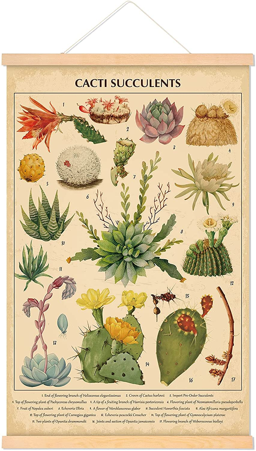 Vintage Cacti Succulents Poster Cactus Wall Art Prints Rustic Cactus Hanging Wall Decor Hanging Canvas Frame Wall Poster for Living Room Office Classroom Bedroom Dining Room Decor, 15.7 x 23.6 Inch