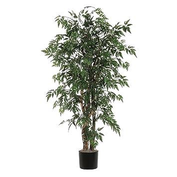Amazon.de: Vickerman Ming Aralia (Gattung) Executive Baum ...