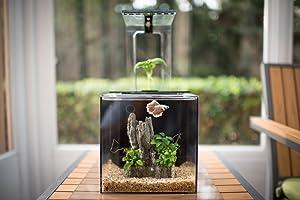 EcoQube Aquarium - Desktop Betta Fish Tank
