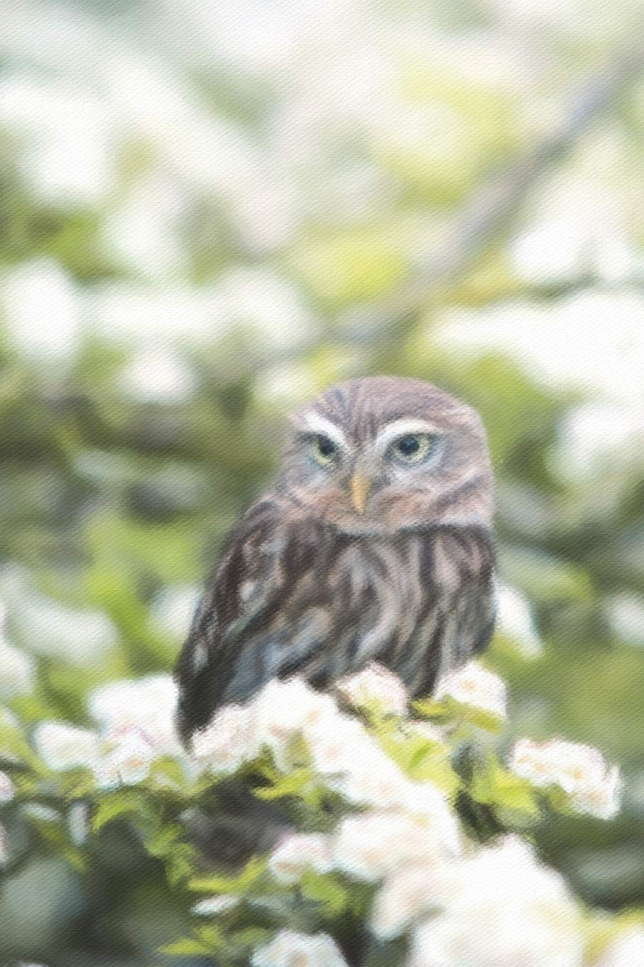 Download Little Owl And Tree Blossoms - Lined Notebook with Margins: 101 Pages, Medium Ruled, 6 x 9 Journal, Soft Cover ebook