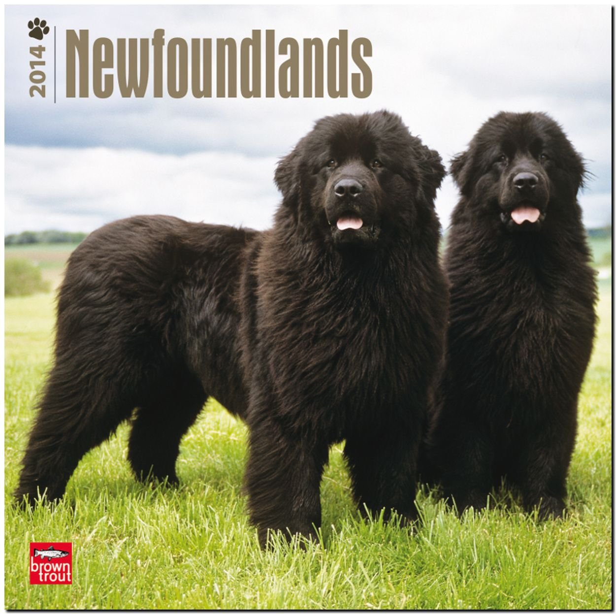 Newfoundlands 2014 - Neufundländer: Original BrownTrout-Kalender [Mehrsprachig] [Kalender]