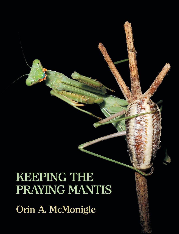 Keeping the Praying Mantis: Mantodean Captive Biology, Reproduction ...