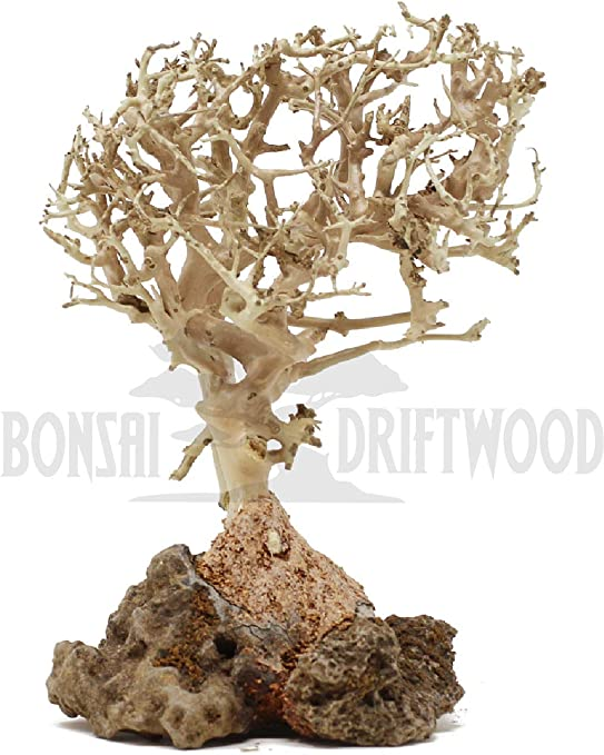 Handcrafted Fish Tank Decoration Stabilizes Environments Easy To Install Natural Helps Balance Water Ph Levels 5 Inch Height Bonsai Driftwood Aquarium Tree Patio Lawn Garden Bonsai
