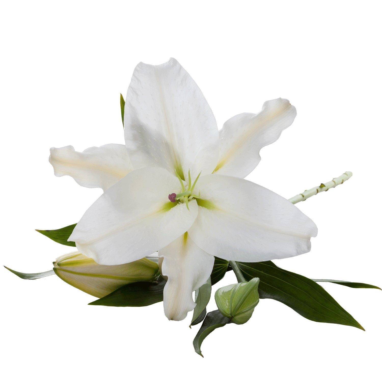 Oriental Lilies | Crystal - 10 Stem Count by Flower Farm Shop