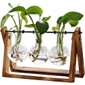 Xxxflower Plant Terrarium with Wooden Stand