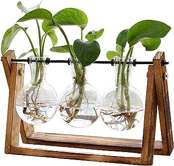 Xxxflower Plant Terrarium with Wooden Stand