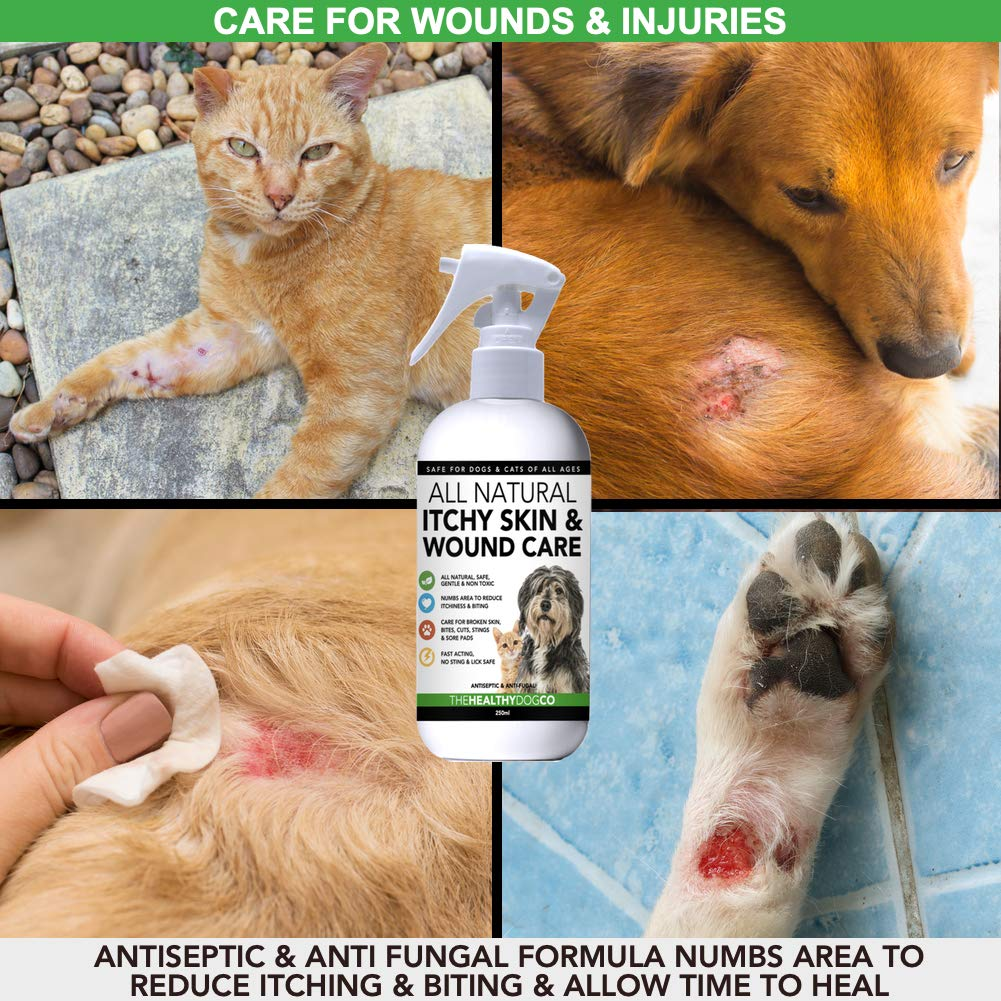 All Natural Itchy Skin & Wound Care Spray For Dogs & Cats | Anti Itch &  Skin Care For Pets | Quickly Helps With The Treatment of Itchiness, Broken