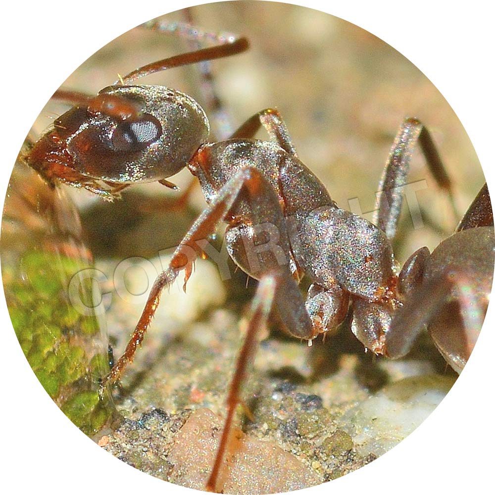 Children Graphic Flavour Insects Bugs Reward Sticker Labels Parents Teachers 6 Stickers @ 9.5cm