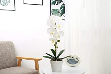 52bda880fd7 Amazon.com  JTMall Artificial Flowers White Silk Orchid Arrangement ...