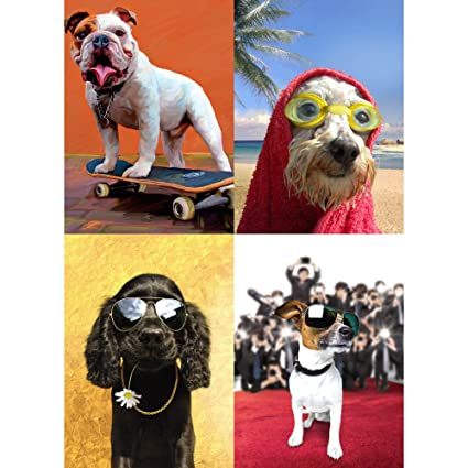 Amazon Tree Free Greetings Cool Dogs Birthday Card Assortment