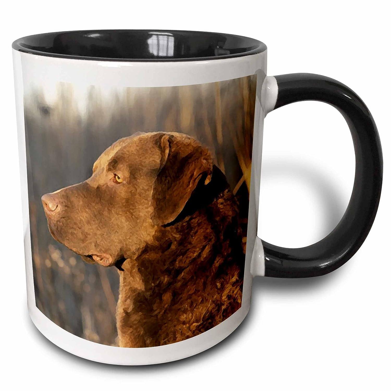Two Tone Black Mug 11 oz Multicolor mug/_5324/_4 3dRose 5324/_4 Chesapeake Bay Retriver Portrait