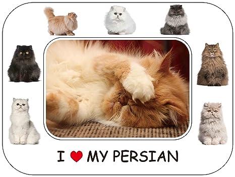 Regalo gato Persa - hermosa 20,32 cm x 15,24 cm marco de