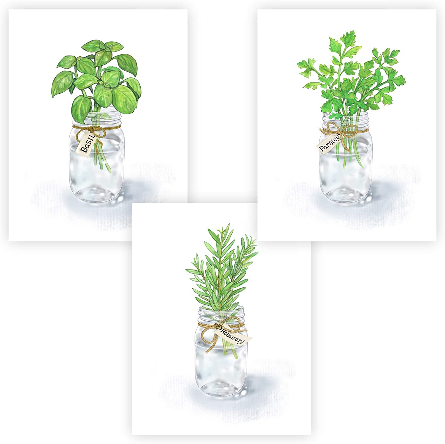 "FannyD Kitchen Herbs UNFRAMED Watercolor Art 3 Print Set 8.5"" x 11"" Perfect for Bedroom, Bathroom, Kitchen, Nursery etc. Can Be Framed 8"" x 10"" or Larger with mat. Unique Wall Decor!! (Herbs 1 Green)"