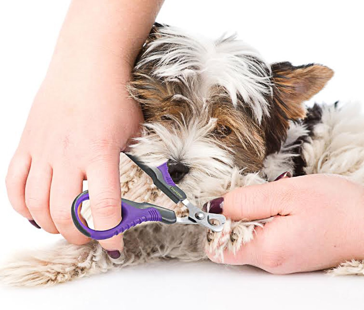 Hertzko Professional Pet Nail Scissors By Sharp Stainless Steel Angled Blade for Easy Cutting - Suitable for Small Breed Animals - Dogs, Cats, Rabbits and Birds by Hertzko (Image #4)