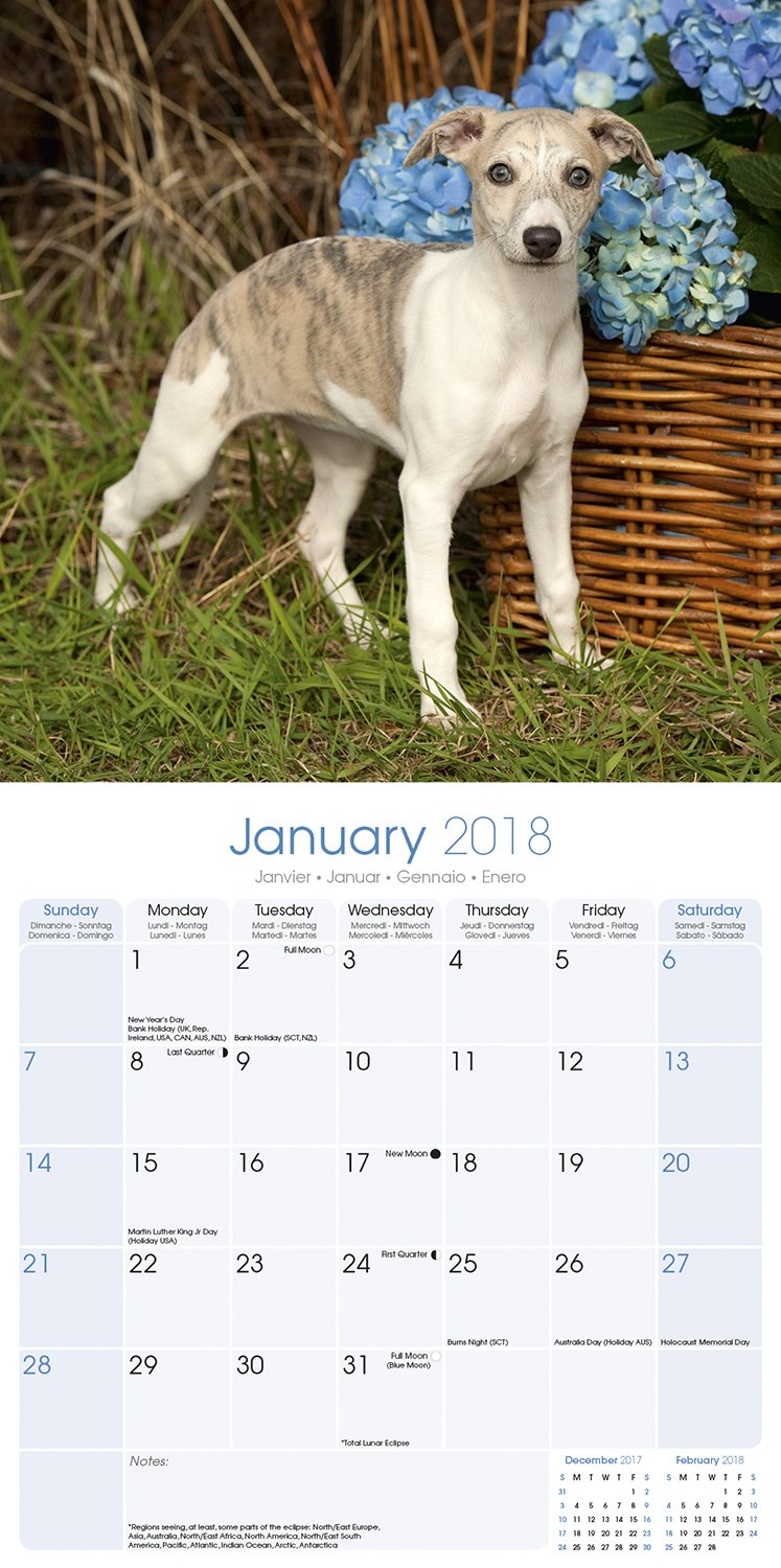 Whippet calendar dog breed calendars 2017 2018 wall calendars whippet calendar dog breed calendars 2017 2018 wall calendars 16 month by avonside megacalendars 9781785801105 amazon books geenschuldenfo Choice Image