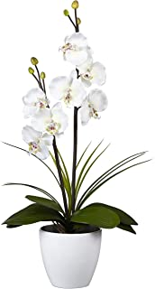 orchidee blanche fausse