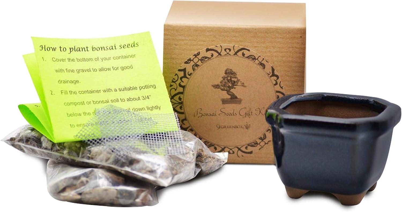 9GreenBox: Bonsai Seed Kit - Japanese Cherry Blossom