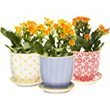 Chive - Liberte Succulent and Cactus Planter Pot with Drainage Hole and Saucer, Small Porcelain Pot - Bulk 3 Pack Tray and Dish