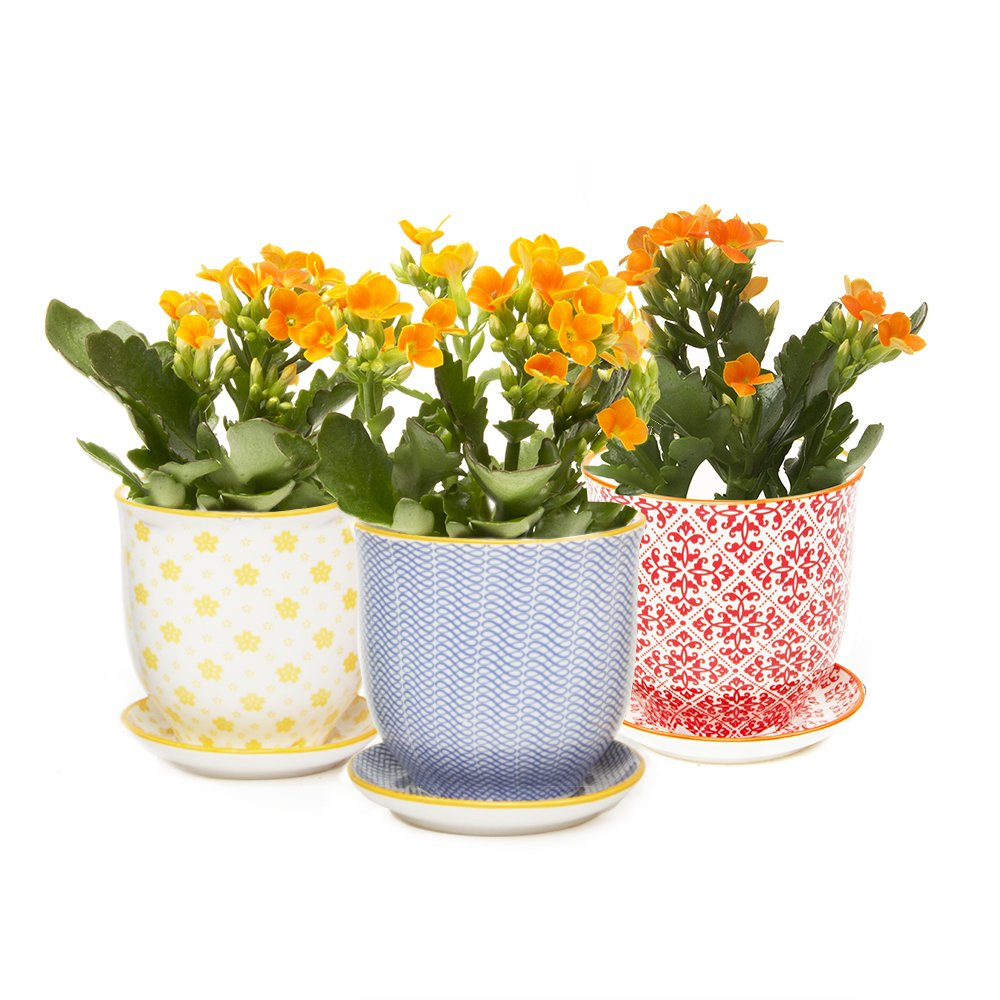 Chive - Liberte, Small Succulent and Cactus Planter Pot, 3'' Flower and Plant Container with Drainage Hole / Saucer, Mini Pot for Indoor / Outdoor Garden Decor, Yellow, Blue, (Liberte 3 Set of 3) by Chive