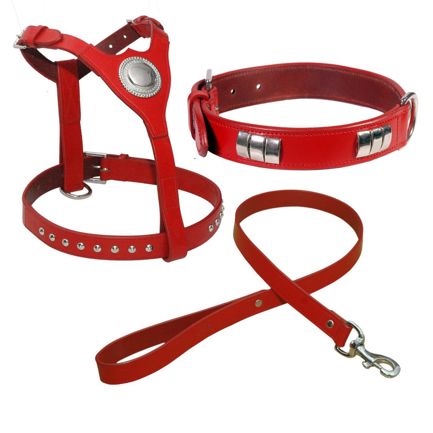 Arnés de Bull Terrier Inglés, cuello y piel con plomo y cromo ...