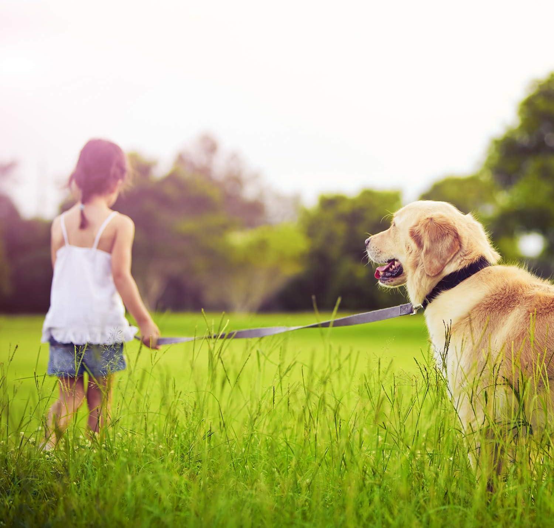 tress/ée double laisse solide et r/églable en 3 Differente longueurs laisse r/églab VITAZOO laisse /éducative pour chien en noir graphite 1,1 m - 2,1 m laisse pour chien   2 ans de garantie de satisfaction laisse en corde