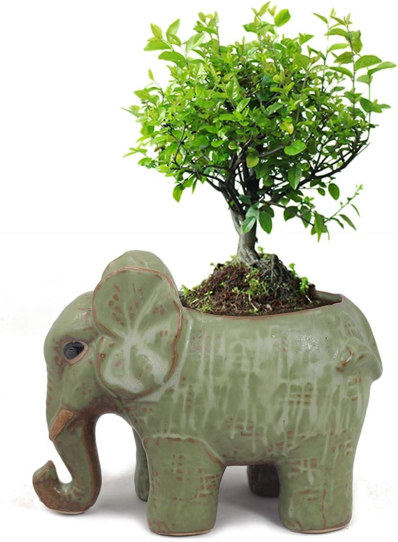 Dahlia Adorable Elephant Handmade Ceramic Succulent Planter Plant Pot Flower Pot, Father