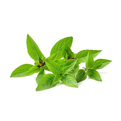 Thai Basil Herb Seeds - Non-GMO - 0.5 Grams : Basil Plants : Garden & Outdoor