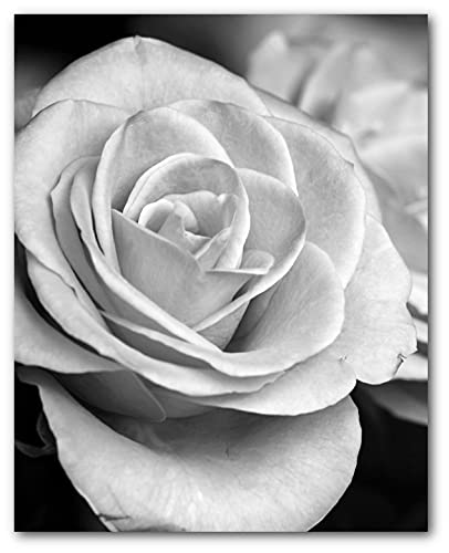 Rose print black and white art 8 x 10 inches unframed