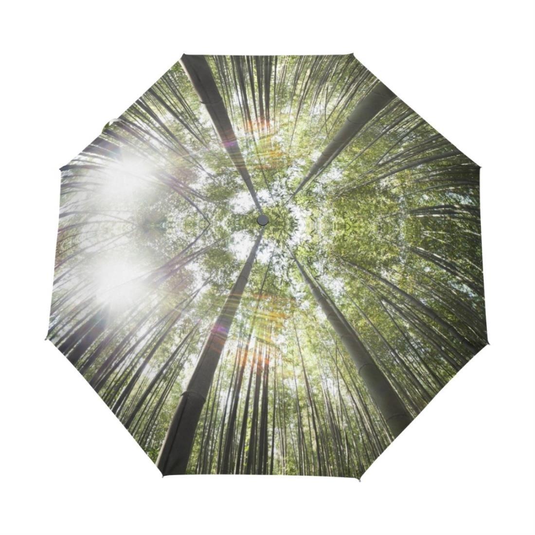 Nuevo senderismo forestales de la mujer personalizado paraguas plegable Custom paraguas creativo Lady soleado y lluvioso paraguas personalizados: Amazon.es: ...
