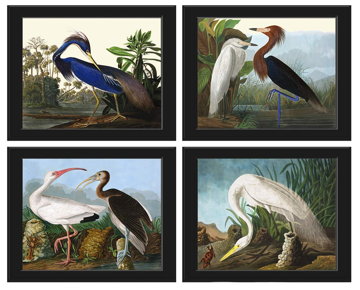 Bird Print Wall Art Set of 4 Prints Beautiful James Audubon Large White Ibis Blue White Purple Heron Home Room Decor Unframed