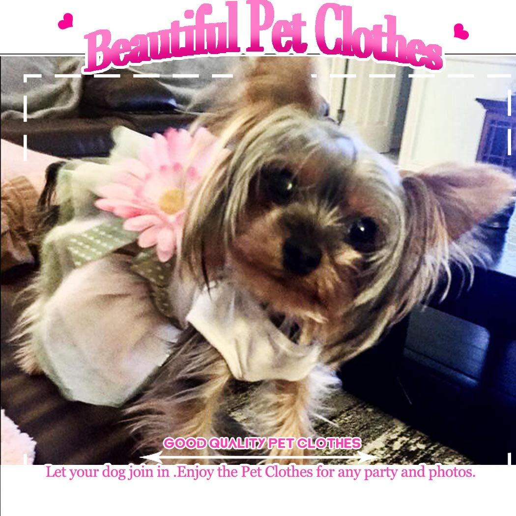 Amazon.com: Petea Daisy - Vestido de tutú para perro, con ...