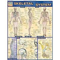 Skeletal System (Quick Study Academic)