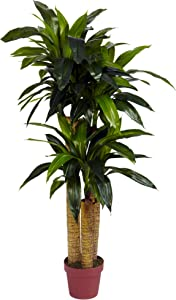 Nearly Natural 6648 4ft. Corn Stalk Dracaena Silk Plant (Real Touch)